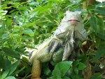 Lizard sits pretty