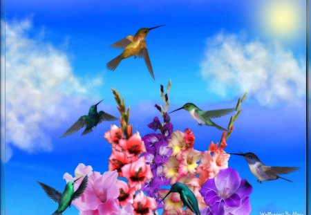 Hummingbirds 1600x1200 - Hummingbirds, Spring, Gladiolas, Floral, Flowers, Animals, Birds