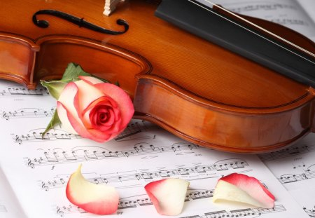 A Love Song - Song, Music, Love, Rose, Violin