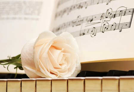 The Love Song - Song, Piano, Music, White, Rose