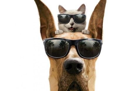 Marmaduke - movie, cat, marmaduke, dog