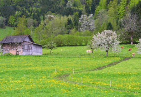 Green nature - house, forest, spring, splendors, cow, landscape, green, beautiful, trees, photo