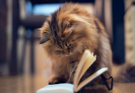 How To Catch A Mouse - reading, book, cat, cats, animals, other
