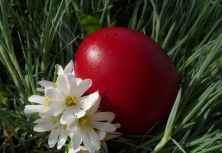Simply beautiful - red, Easter, holidays, flowers, eg
