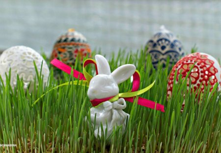 Easter time - Easter, special days, holidays, grass, fresh, eggs, bunny