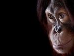 orangotang