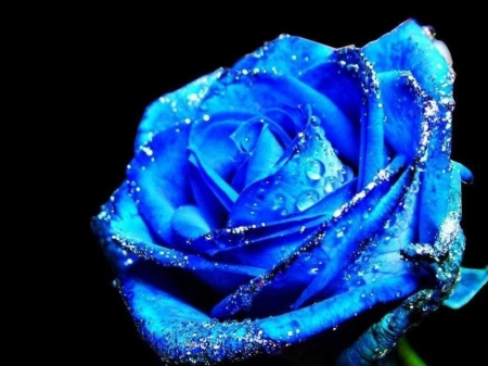 this Blue Rose is for my Mom Applejackqueen - I, Pretty, Love, u