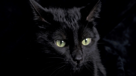 A Black Cat With Green Eyes Cats Animals Background Wallpapers