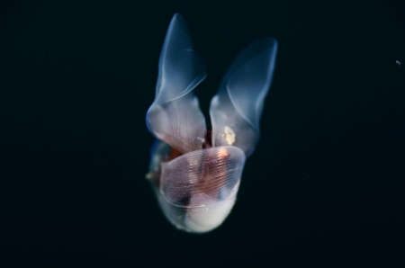 Underwater beauty - underwater, water, jelly fish, creature