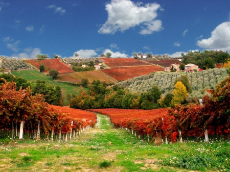 Le Vigne Rosse del Sagrantino - colorful, autumn, lovely, grass, wine, vineyard, beautiful, sky, clouds, countryside, grape, nice, village