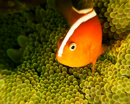 Fish - corals, underwater, reefs, fish