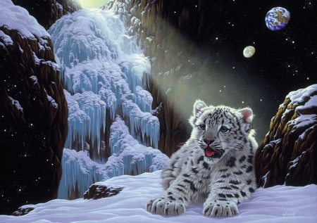 Snow Leopard Cub In Frozen Land