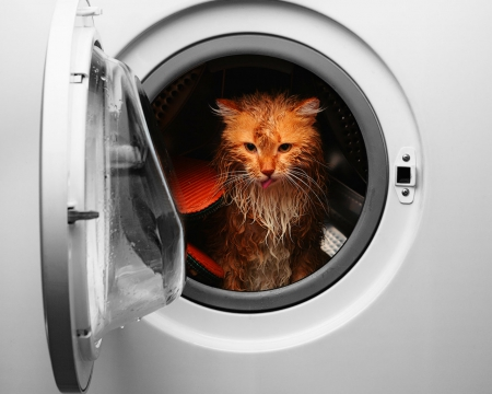 Cat in washing machine - cute, pet, funny, cat, washing machine, animals