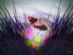 ✫The Last Egg with Butterfly✫