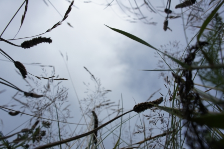 Insect's eye view - grass, perspective, lawn, green, meadow