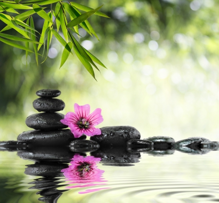 SPA - stone, flower, spa, relaxing, pink