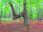 Fourked Tree