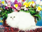 A persian chinchilla cat by some flowers