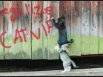 Kitten Graffiti
