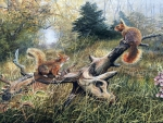 Red Squirrels In Woodland