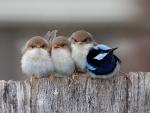 buddy birdy