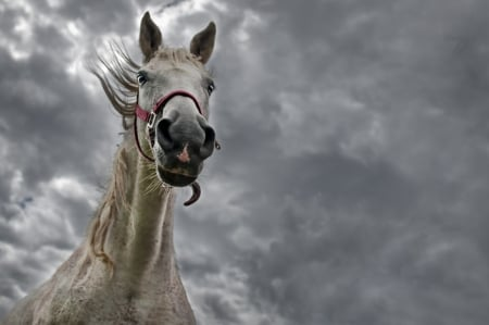 Horse and bad weather - skies, cloud, horse, grey