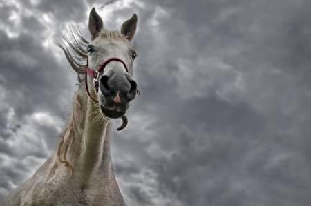 Horse and bad weather - cloud, horse, grey, skies