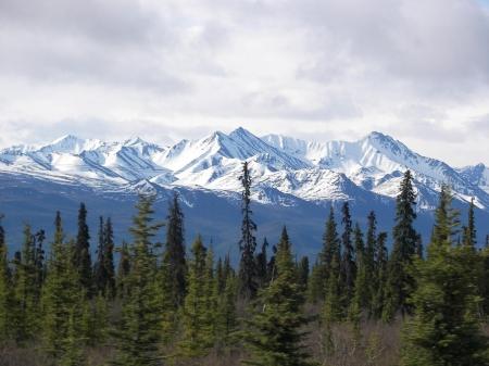 Little Forest And Mountain Alaska
