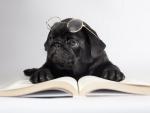 *** Reading pug ***