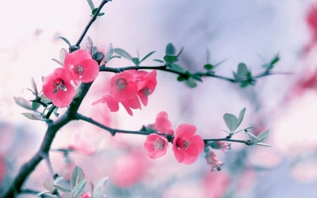 Pretty Flowers Flowers Nature Background Wallpapers On Desktop