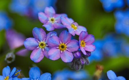 Image result for indecisive spring images