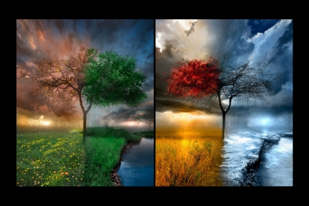POWER OF THE SEASONS - fall, lovely, frame, abstracts, beautiful, spring, collage, seasons, winter, the 4 seasons, summer, nature