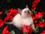 Kitten with some roses