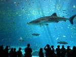 Georgia Sharks