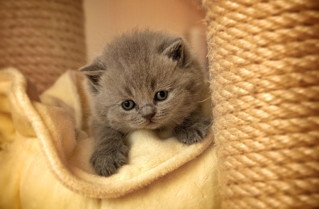 Fluffy kitty - brown, fluffy, kitty, beautiful, adorable, cat, animal, sweet, cute, kitten