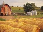 Iowa Hay