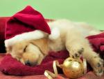 Golden for Christmas♥