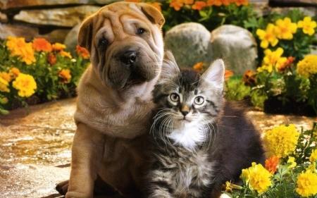 flowers♥ puppy♥ kitten - Cats & Animals