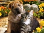 flowers♥ puppy♥ kitten