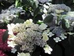 Impressive flowers at the garden
