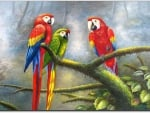 Friendly Macaw