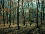 wonderful bare forest in autumn