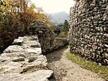 Planted Ruin - roman, walls, ancient, cliffy, austria, nature, ruin, old
