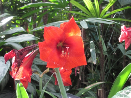 Flowering Plants Changed the World 09 - garden, Flowers, photography, lily, green, red