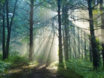 morning sun rays in a forest