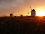 windmills by wheat fields at sunset