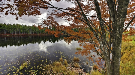 beautiful autumn lake in nova scotia - leaves, forest, clouds, reflection, autumn, lake