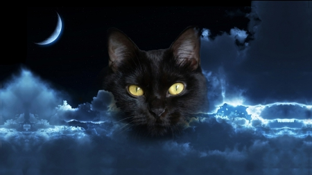 Spirit of the Night - mysterious, moon, night, Cat