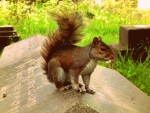 Attention loving squirrell