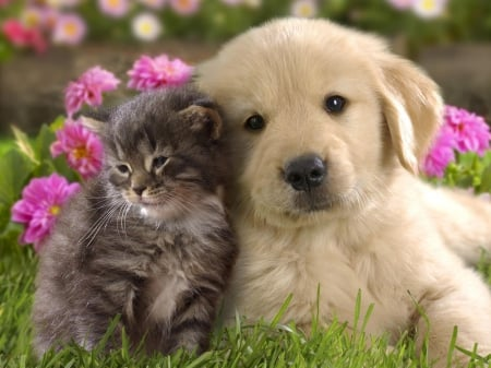 love - flower, cat, love, dog